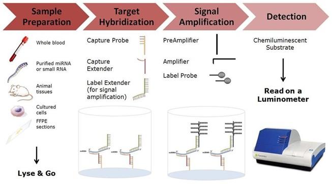 2.0 系列产品是世界著名基因芯片制造商Affymetrix 公司旗下Panomics的畅销产品。该试剂盒采用Branched DNA(b-DNA)技术,可以快速方便的完成核酸的精确定量检测。它克服了传统的real-time PCR(或者q-PCR)技术中的种种不确定因素(如抽提核酸的损失、酶降解、操作次数过多导致的误差等),无需抽提纯化RNA,无需反转录,无需PCR扩增,对样本量下限无严格要求(只需mRNA拷贝数在检测范围内),只需将样本用对应的裂解液裂解后,经探针杂交与信号放大即可迅速得到比real-